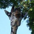 żyrafa #żyrafa #zoo #pyszczek
