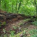 #Białowieża #puszcza #PuszczaBiałowieska #rezerwat