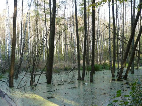 #stawiski #las #zalew #drzewa #natura