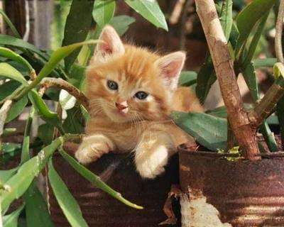 kotek w krzaczkach
