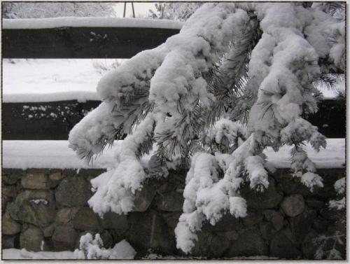 ...ale ciężar! #zima #krajobrazy #rośliny #śnieg