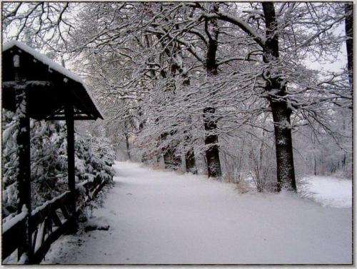 Dziewicza, nie tknięta niczyją stopą biel... #zima #krajobrazy #rośliny #śnieg #drzewa #wieś #natura