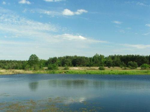 Jedziemy do Borowiny #łąka #starorzecze