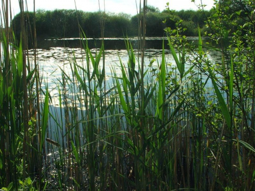 Jezioro Nury #Nury #Gołąb