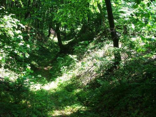 Jedziemy do Stanisławki #las