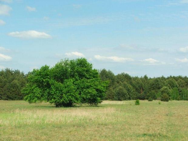 Łąki Bonowskie