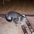 To ja ten duży... #kot #koteczek #kruszynka #mały #fajny