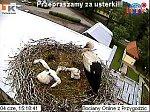 http://images12.fotosik.pl/57/4884958f4e0e2536m.jpg