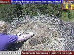 http://images12.fotosik.pl/78/254a86ebb1495562m.jpg